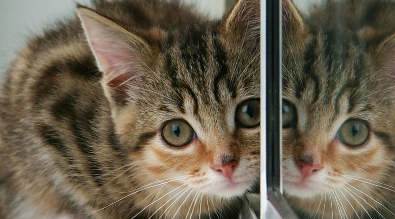 Kitten And Partial Reflection by Paul Reynolds