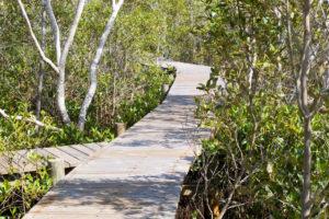 KKs @ Maroochy Wetland Sanctuary | Bli Bli | Queensland | Australia