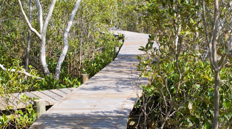 "Image downloaded from Flickr; Image title ""IMGP3593_mangrove_boardwalk"", attributed to Rae Allen. Used under Creative Commons license Attribution-NonCommercial 2.0 Generic (CC BY-NC 2.0) https://creativecommons.org/licenses/by-nc/2.0/"