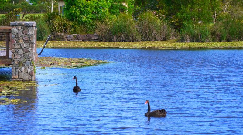 Canavan Gracie recreational park Caloundra