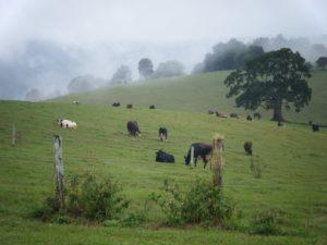 KKs @ Maleny Dairies | Maleny | Queensland | Australia