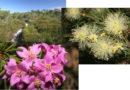 KKs on a wildflower walk