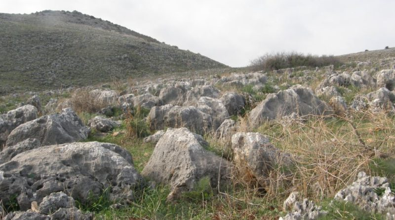 Amiad Hills (hills of the Galiliee)